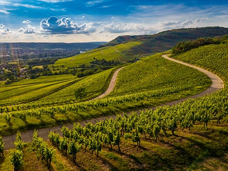 Wine Tour Cortona Tuscany | Wine Tour to Cortona Tuscany, Chianti and Montalcino